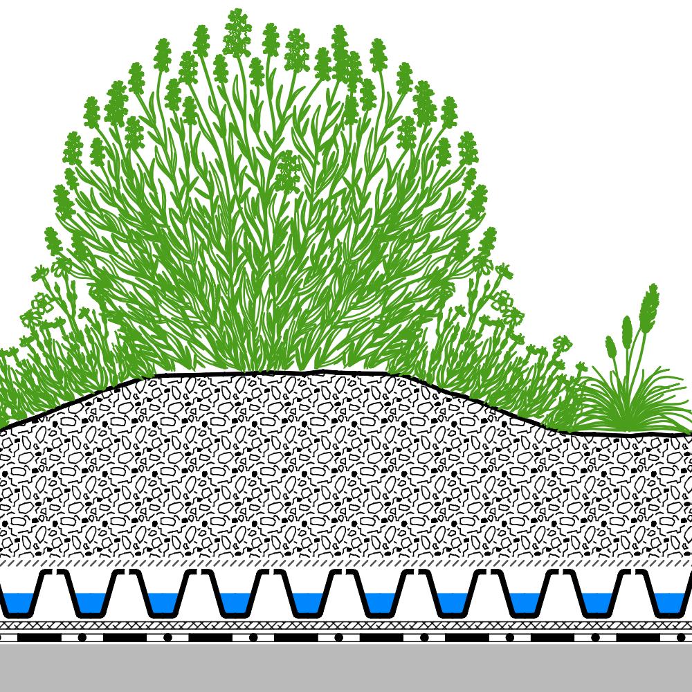 intensive dachbegrünung lavendelheide | zinco